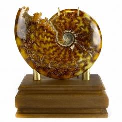 Ammonites Design (40)