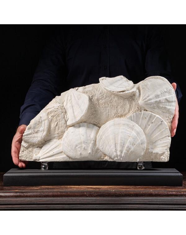 Slab with Fossil Pecten
