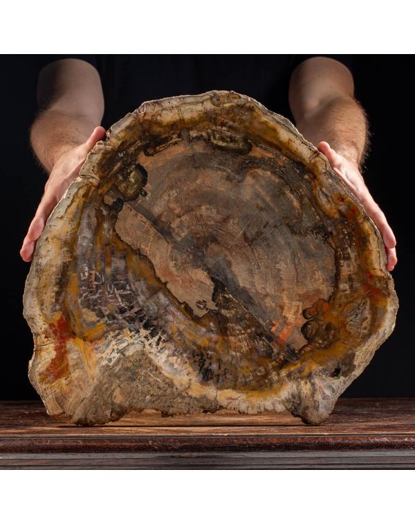 Fossil Wood Slab