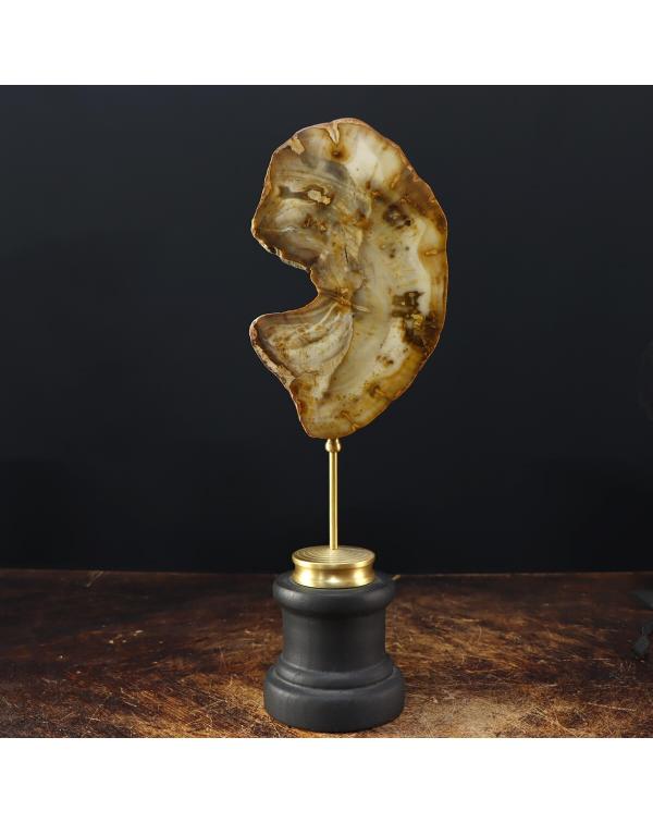 Fossil Wood Slab on Pedestal