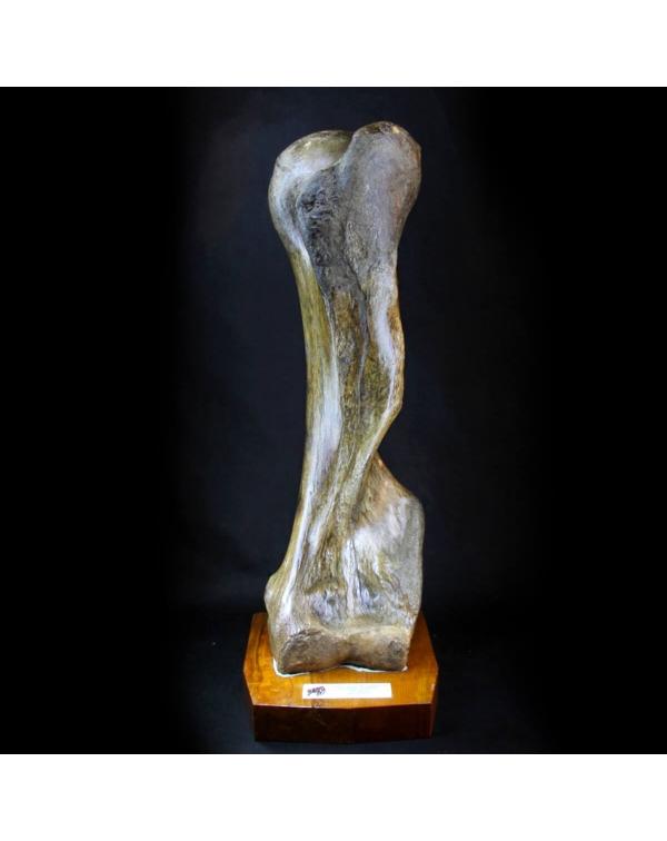 Mammoth Humerus