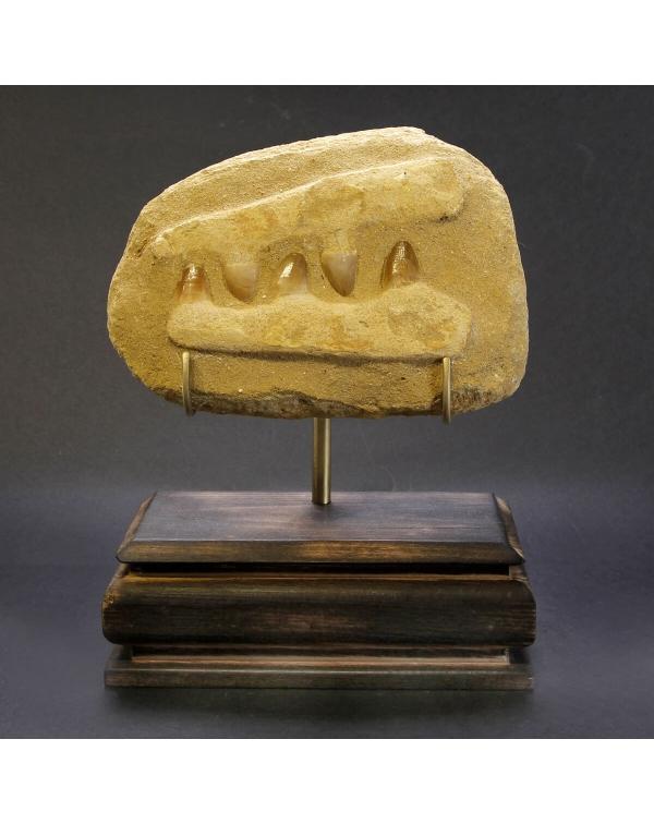 Mosasaurus Jaw on Pedestal