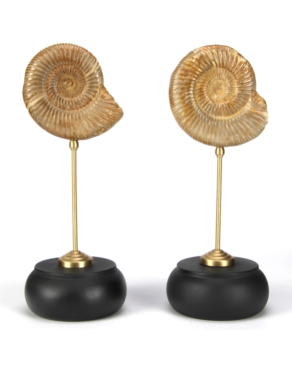 Ammonite Perisphinctes on pedestal