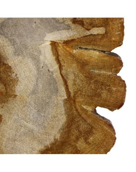 Slabs of Fossil Wood