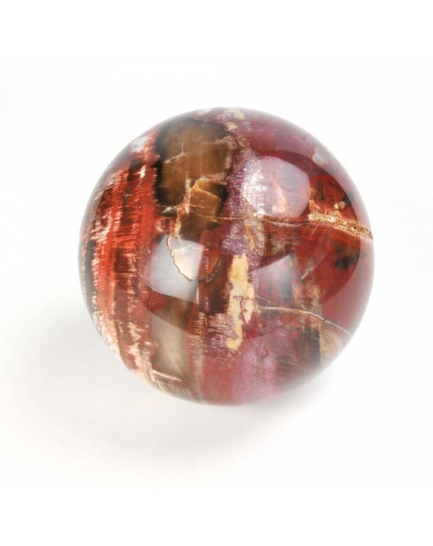 Fossil Wood Sphere