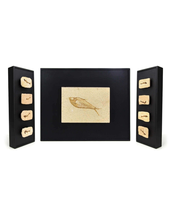 Triptych of Fossils on Frame