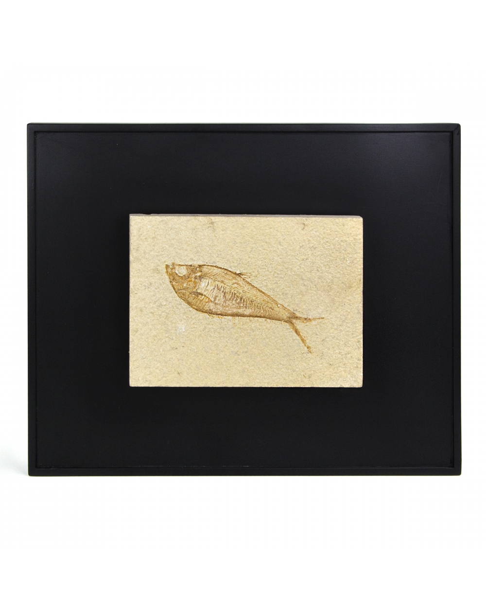 Framework with Wyoming Fossil Fish