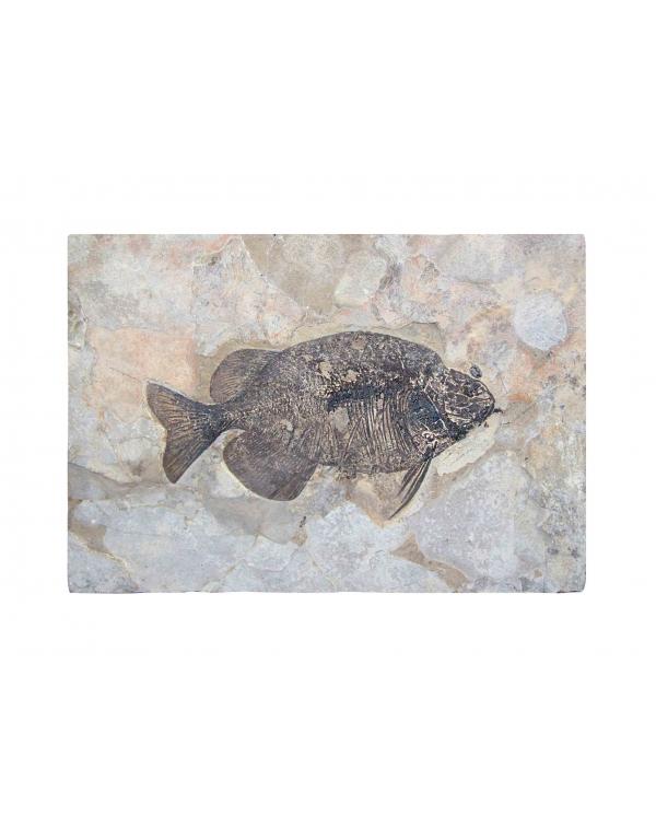 Wyoming Fish