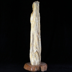 Petrified Wood Free Form (1)