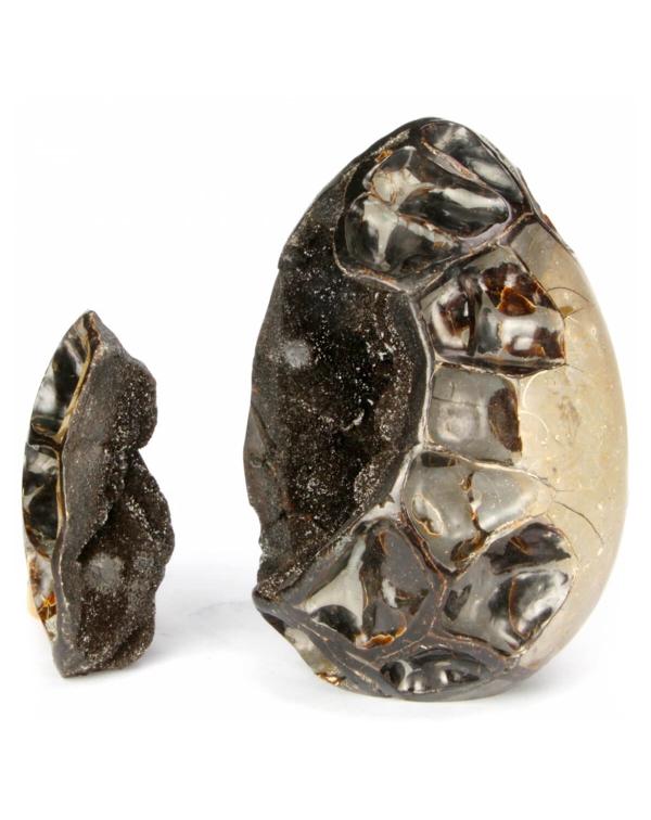 Septaria Egg