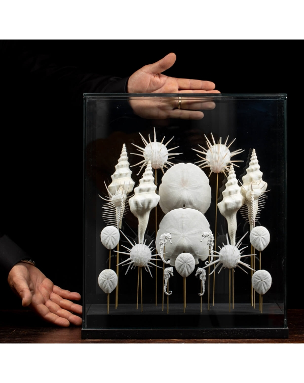Marine Fauna Under Glass Dome