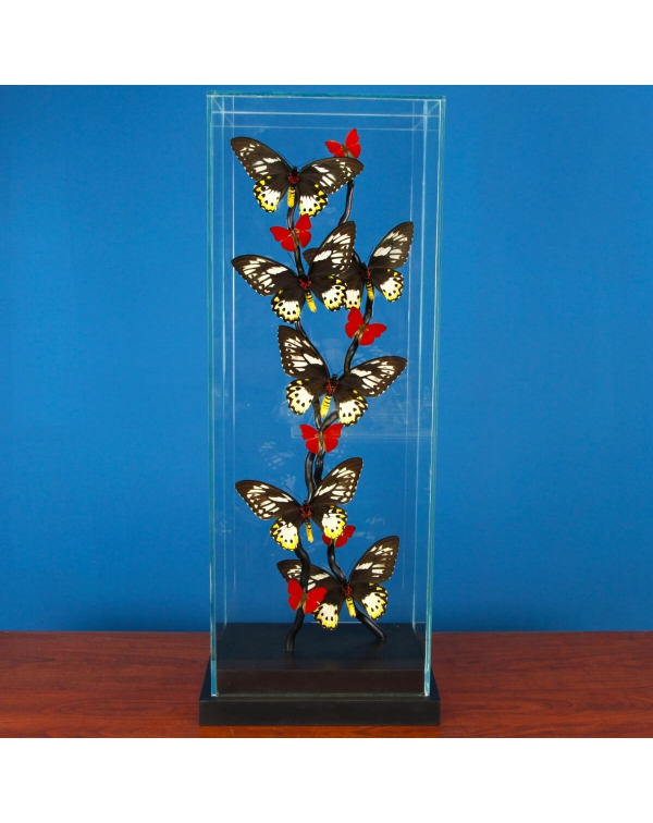 Ornithoptera Priamus and Cymothoe Sangaris Butterf...