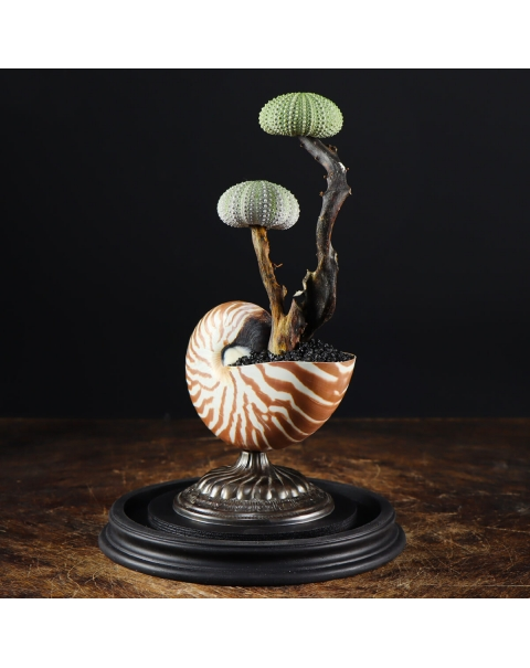 Nautilus and Sea Urchin Under Glass Dome