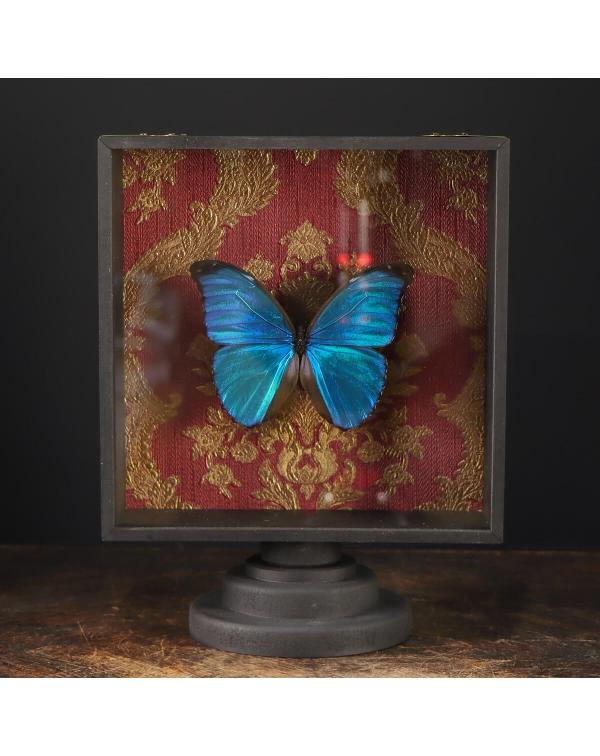 Blue Morph Butterfly under Glass Showcase