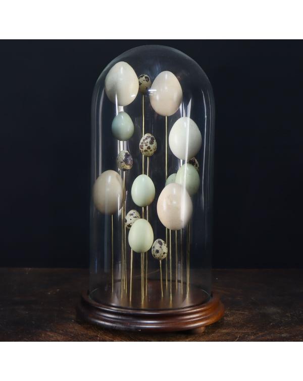 Bird Eggs under Glass Bell