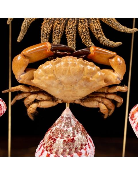 Marine Fauna under the Glass Dome