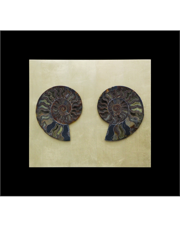 Ammonites Madagascar Painting