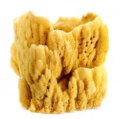 Natural Sponge (5)